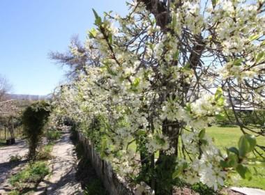 Sarria-jardin-6